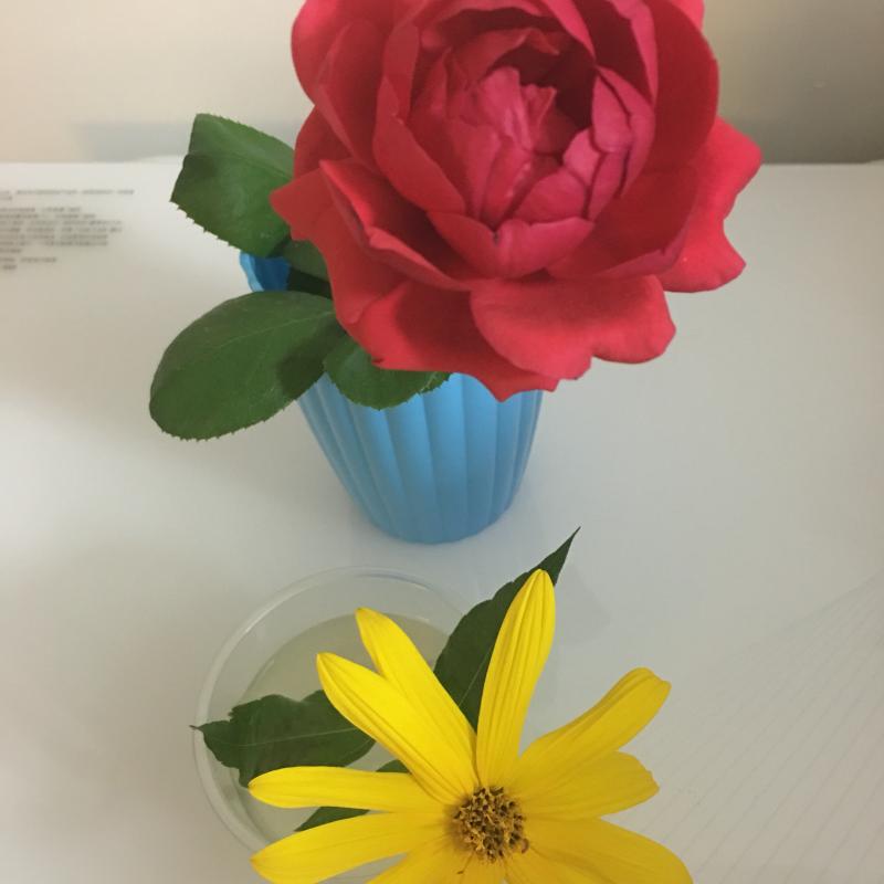 二手拉罐手工制作花