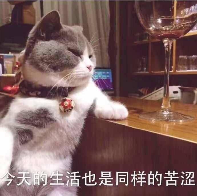 壁纸 动物 狗 狗狗 猫 猫咪 小猫 桌面 690_688
